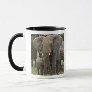 Afrikansk elefantflock, Loxodontaafricana, Mugg