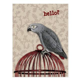 Afrikansk grå färgpapegoja på röd fågelbur vykort