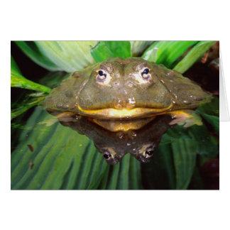 Afrikansk gräva Bullfrog, Pyxicephalus 2 Hälsningskort