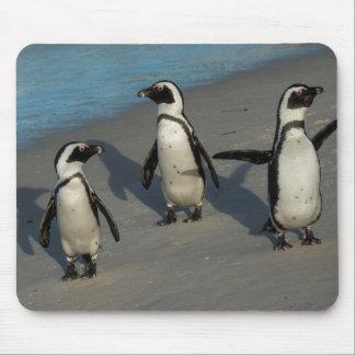 Afrikansk Spheniscus Demersus för pingvin | Musmatta
