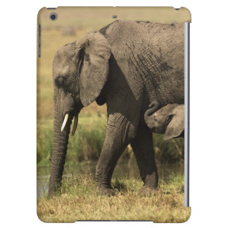 Afrikanska elefanter