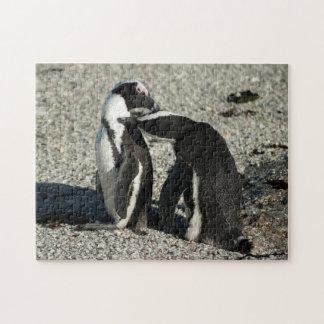 Afrikanska pingvin som ansar varje annan pussel