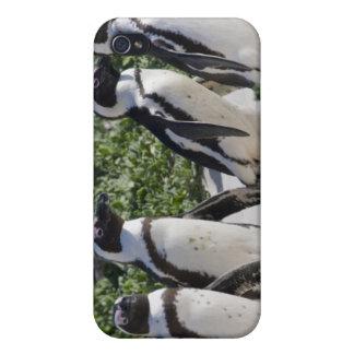 Afrikanska pingvin som förr är bekant som Jackass iPhone 4 Fodral