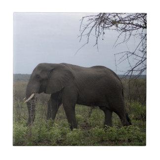 Afrikanskt elefantdjurliv PhotoTile Kakelplatta