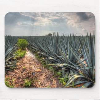 Agave Tequilana Musmatta