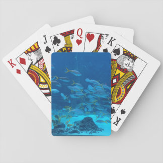 Akvariefisk som leker kort spelkort