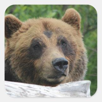 Alaskabo Grizzlybjörn, kodiaken Fyrkantigt Klistermärke