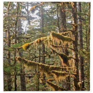 Alaskabo trädMoss Tom Wurl.jpg Tygservett