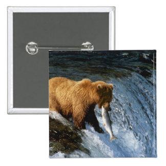 Alaskabobruntbjörn som fångar laxen på bäckar standard kanpp fyrkantig 5.1 cm