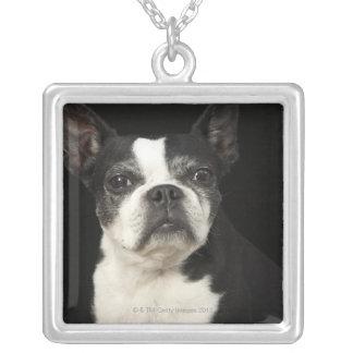 Äldre Bosten Terrier på svart bakgrund Silverpläterat Halsband