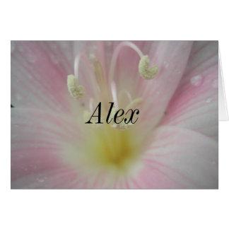 Alex Hälsningskort
