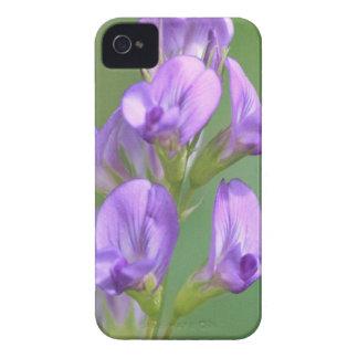 Alfalfa iPhone 4 Skydd