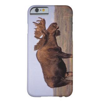älg Alcesalces, tjur med stora horn på kronhjort Barely There iPhone 6 Fodral