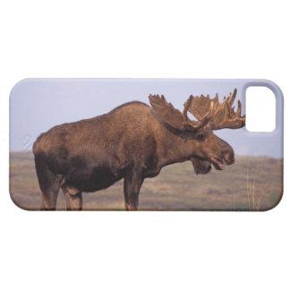älg Alcesalces, tjur med stora horn på kronhjort iPhone 5 Skydd