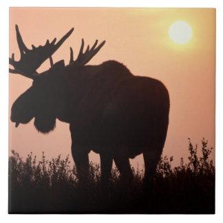 älg Alcesalces, tjur med stora horn på kronhjort, Kakelplatta