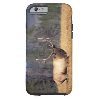 älg Cervuselaphus, tjur i ett fält in Tough iPhone 6 Fodral