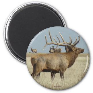 Älg för tjur E0004 Magnet Rund 5.7 Cm