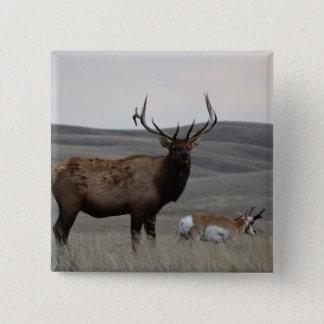 Älg för tjur E0063 och Pronghorn antilop Standard Kanpp Fyrkantig 5.1 Cm