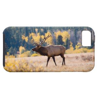 Älg i den steniga bergnationalparken, Colorado iPhone 5 Case-Mate Fodral
