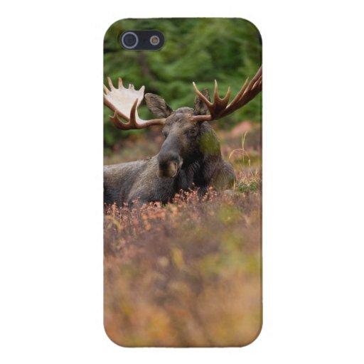 Älg - iPhone 5 täcker iPhone 5 Cases