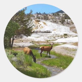 Älg på Mammoth Hot Springs Runt Klistermärke