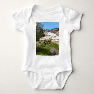 Älg på Mammoth Hot Springs T Shirts
