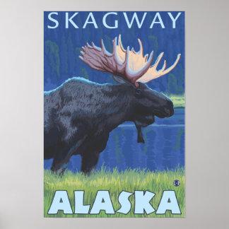 Älg på natten - Skagway, Alaska Poster