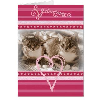 Alla hjärtans dagkort med två lyckliga katter hälsningskort