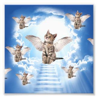 Alla katter går till himmel fototryck