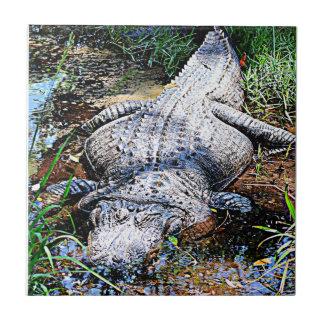 Alligator (Florida, Louisiana och Mississippi) Kakelplatta
