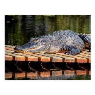 Alligatorn på Homosassa fjädrar Vykort