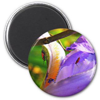 Allt i specificerar - irisen och insekter magnet