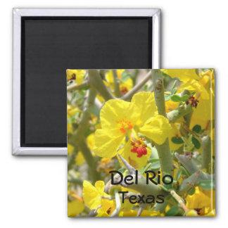 Allthorn för Del Rio Texas magnetgult blomma Magnet