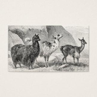 Alpacas för Llamas för mall för vintageLlamaAlpaca Visitkort