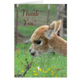 Alpacatackkort Hälsningskort
