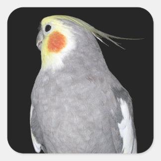 Älsklings- fågelCockatielfoto Fyrkantigt Klistermärke