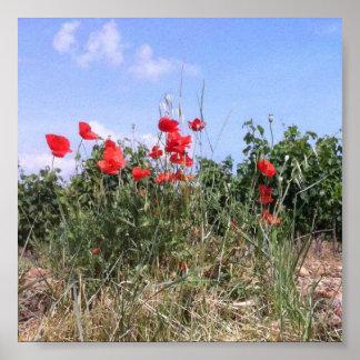 Älskvärd affisch av röda vallmor och Vines