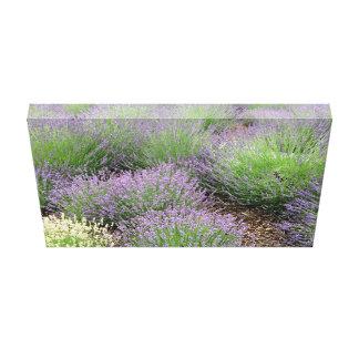 Älskvärd lavendel canvastryck