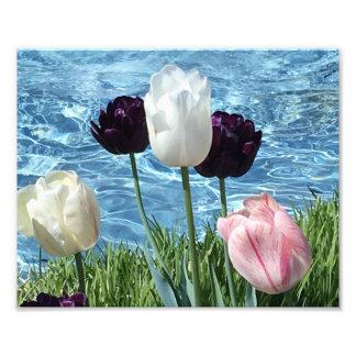 Älskvärd vit, rosor och lila blommor fototryck