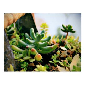 Älskvärda inlagda växter vykort