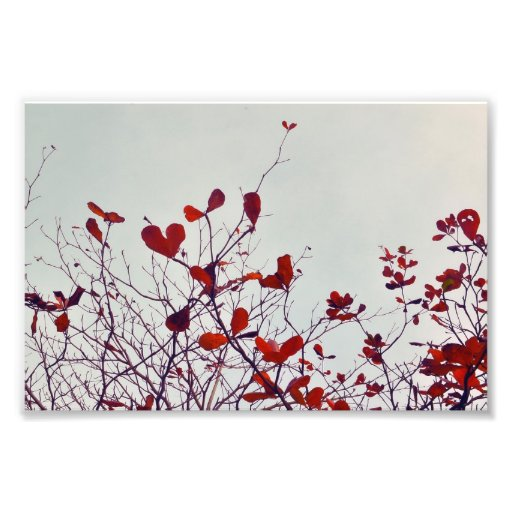 älskvärda löv foton
