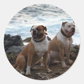 amerikanbulldogg runt klistermärke