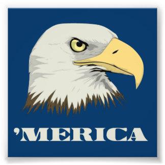 Amerikanörn för Merica Fototryck