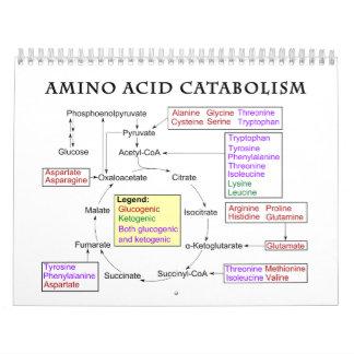 Amino syrligt Catabolismdiagram Kalender