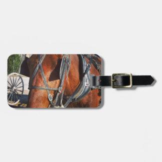 Amish häst bagagebricka