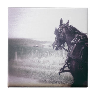 Amish häst kakelplatta