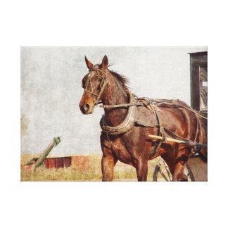 Amish häst och Buggy Canvastryck