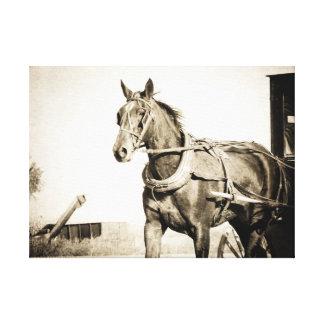 Amish häst och Buggy i Sepia Canvastryck
