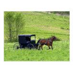 Amish häst och buggy nära Berlin, Ohio. Vykort