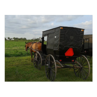 Amish häst och Buggy på solnedgången Vykort